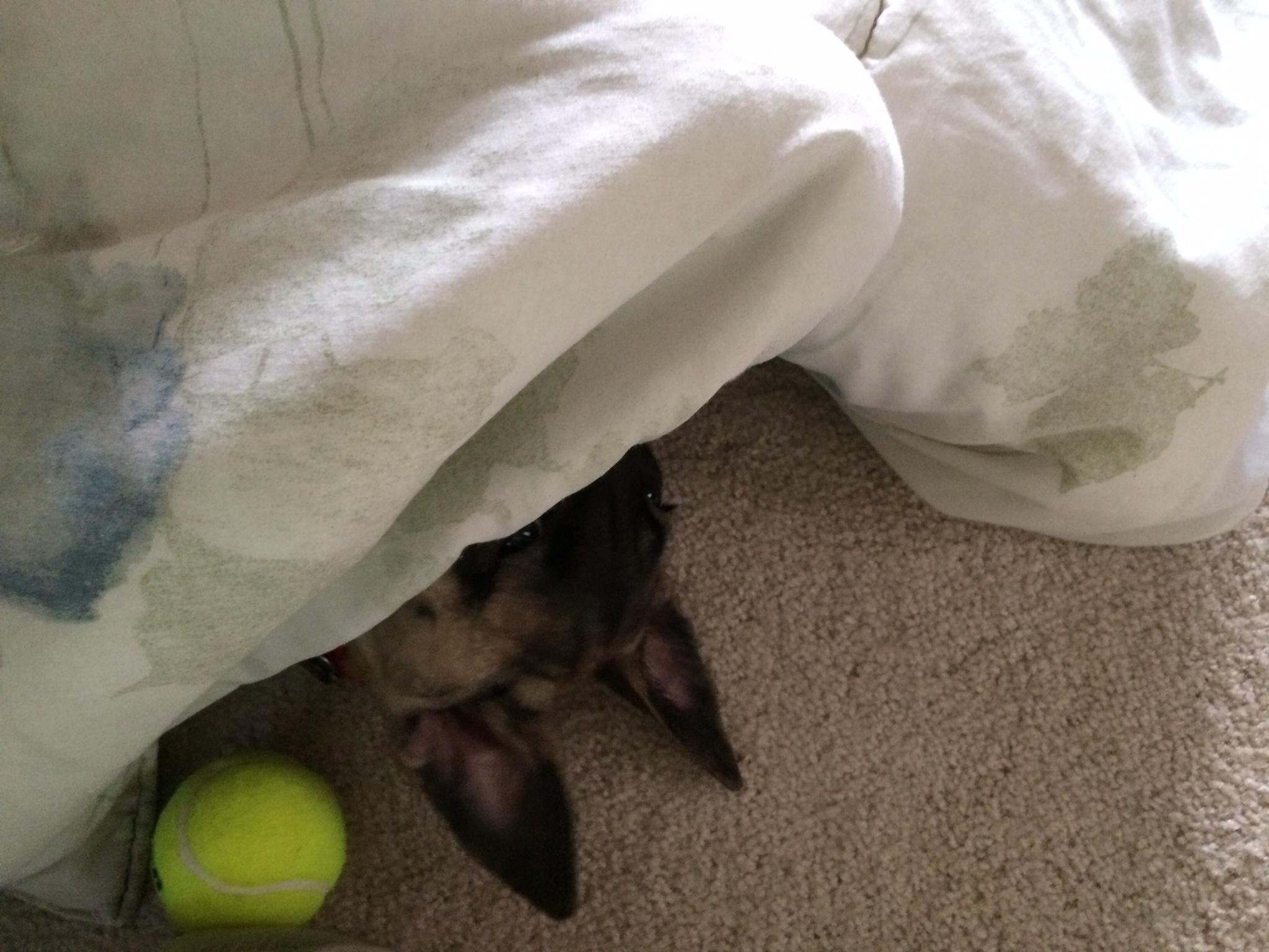 Loving her blanket