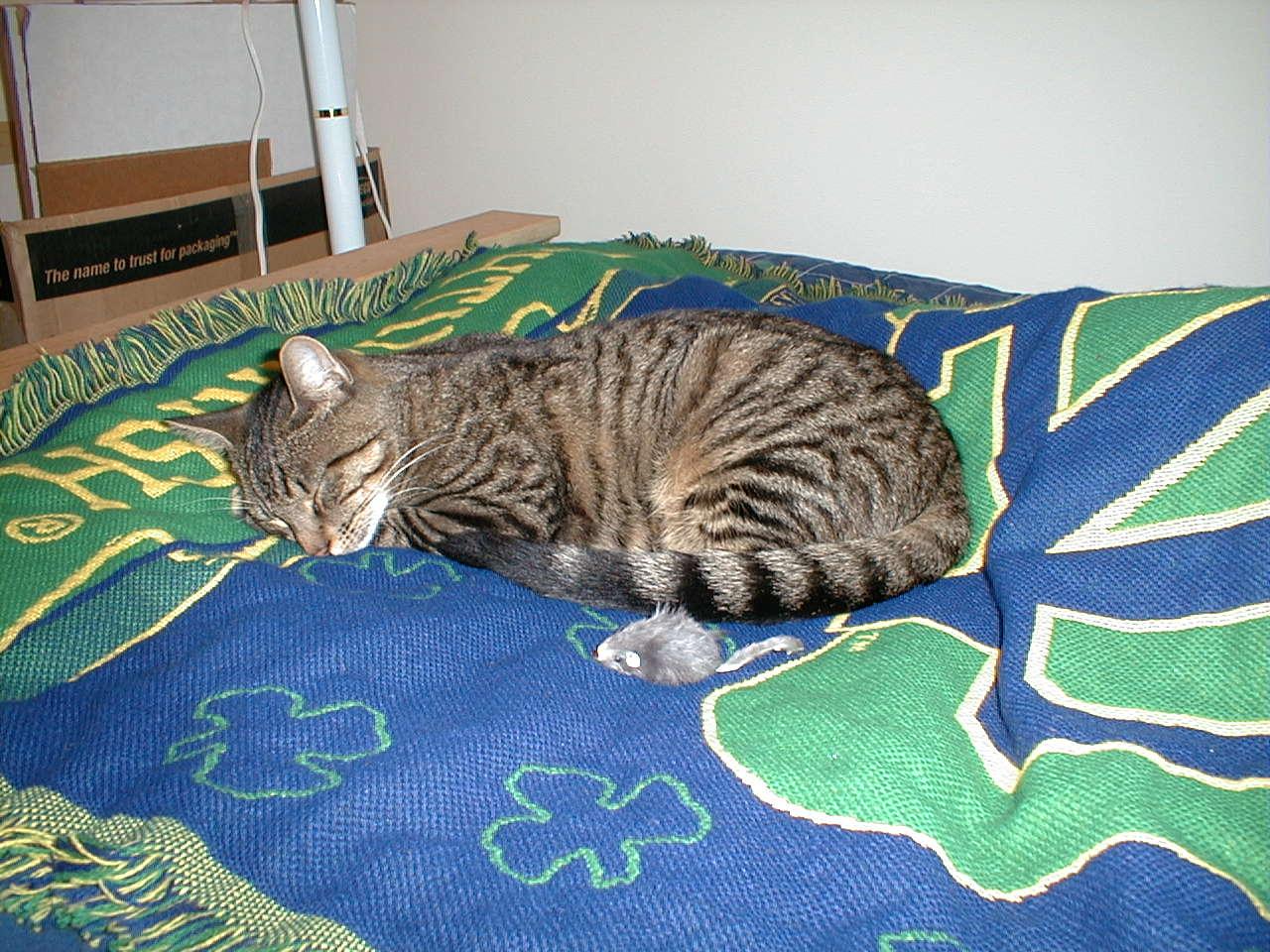 Tucker kitten