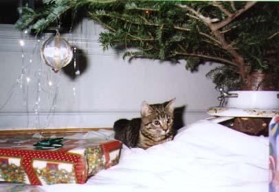 Dax at Christmas